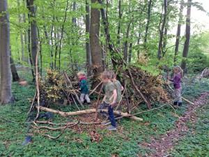 Bæverne bygger hule i Rundskoven.